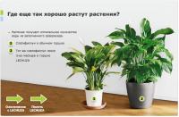 растения лучше растут