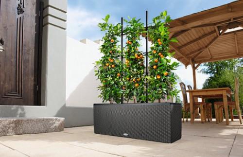 Выращивание уличных растений в горшках 13