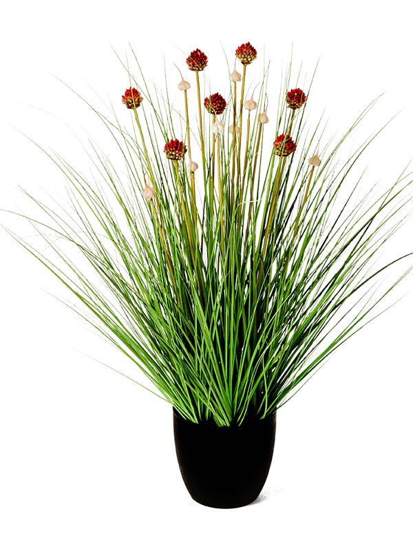 30/allium-grass-8fw91n085
