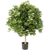 variegated-giant-ball-schefflera-38604nw