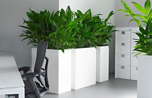 Голландские дизайнерские кашпо для больших растений